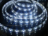CE EMC LVD RoHS Two Years Warranty, LED Flexible SMD3528/5050 Cool White Strip Light with CE & RoHS