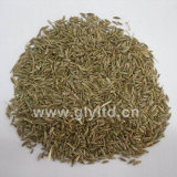 Natural Dried Good Quality Cumin Seeds
