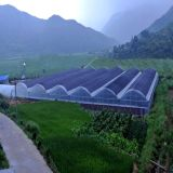 Multi Span Film Agriculture Gree House