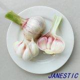 2017 New Crop Fresh Normal White Garlic From Shandong
