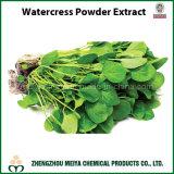 Watercress Powder Extract with Extract Ratio 10: 1