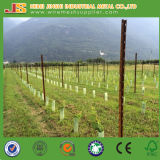 Heavy Duty Hot Dipped Galvanized Vineyard Post Grape Post
