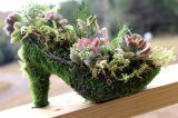 Self-Watering Moss & Succulents Shoe Planter Centerpiece
