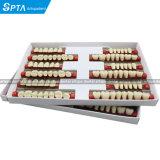 Dental Acrylic Resin Teeth Two-Layer Three-Layer Full Set