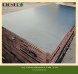 SGS Certificate Water Proof Film Faced Plywood