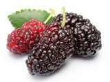 Mulberry Fruit Extract with Anthocyanins for Food Supplement