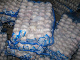 6.0-6.5cm Chinese Fresh Normal White Garlic