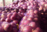 2017 New Crop Fresh Red Onion for Exporting