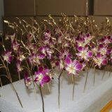 Gift for Mother's Day-Gold Orchid