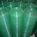 Welded Wire Mesh --- Galvanized/PVC Coated (DYWM961044)