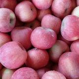 Fresh Blush Red and Sweet FUJI Apple