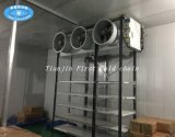New Design Cold Room/Storage for Fruits Vegetables Meat Seafood Processing