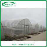 Single Tunnel Film Vegetables Greenhouse for sale