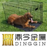 Green Environmental Protection Pet Carrier