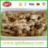 Fresh or Air Dry Organic Ginger with EU Standard