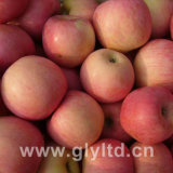 FUJI Apple (Qinguan apple, Huaniu apple)