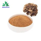 Hot Sales Maitake Mushroom Extract Grifola Frondosa Extract 50% Grifolan