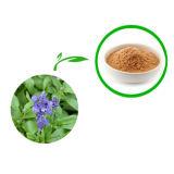Sage Extract /Sage Leaf Extract with Rosmarinic Acid Carnosic Acid