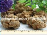 Notoginseng Plant Medicinal Materials 20 PCS/500 G Plant in Yunnan Wenshan