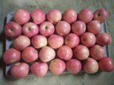 Fresh Qinguan Apple with Best Quality