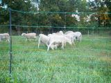Competitive Price Sheep Fence Netting/Sheep Fence Netting
