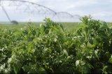 Large Farmland Centre Pivot Irrigation System