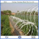 Galvanized Razor Barbed Wire Mesh