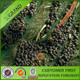 Latest Olive Collecting Net Factory