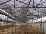 Black/Green Plastic Agriculture Sun Shading Netting