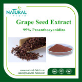 Pure Plant Extract Grape Seed Extract Powder Proanthocyanidin 95 %, Grape Seed Extract