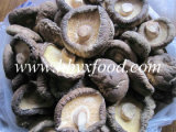 China Dried Smooth Shiitake Mushroom in Different Cap Size 3-8cm Vegetable