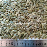 Chinese Pumpkin Seed Kernels Peeled by Hand