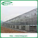 Agricultural Glass Greenhouse with high gutter