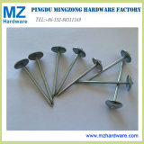 Galvanized Umbrella Head Roofing Nails (8G-13G)