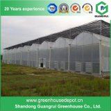 Best Selling Multi-Span Plastic Film Greenhouse for Sale