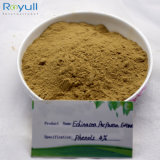 Organic Natural Echinacea Purpurea Extract Chicoric Acid