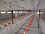 Steel Frame Structure Chicken Farm Poultry House