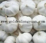 Fresh White Garlic with Good Quality
