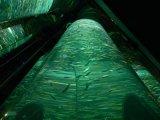 Cylinder Fish Tank Aquarium