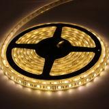 LED AC 12V/24V LED Strip Light LED