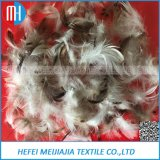 Grey and White Duck Feather Sale with High Quality