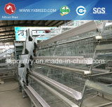 Poultry Feed Machine for Layer Chicken
