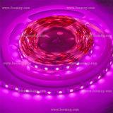 Pink Lighting LED Light Bar LED Light LED Strip Light
