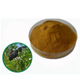Siberian Ginseng Extract Eleutheroside for Foods Supplement