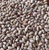 Round Shape Edible Pinto Bean Light Speckled Kidney Bean