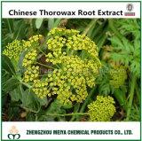 100% Natural Chinese Thorowax Root Extract with Saikosaponins 5%