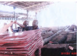 Copper Cathode Grade a 99.99%Min