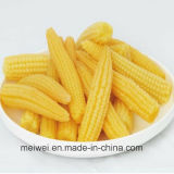 Canned Baby Corn with Top Quality