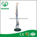 My-N010 High Performance Alloy Steel 10L Oxygen Cylinder