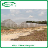 Tunnel Film with Insect Net Greenhouse